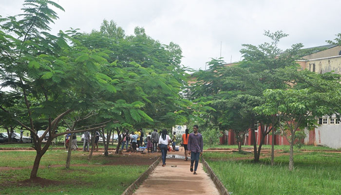 AE-FUNAI TO PLANT 100, 000 FAST-GROWING TREES